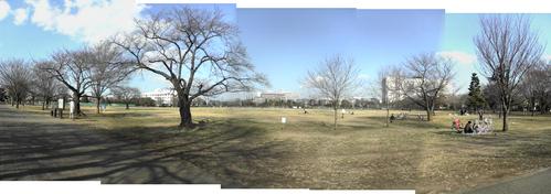 冬の日の武蔵野中央公園